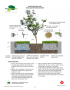 Boulevard Tree Well Installation Spec Sheet
