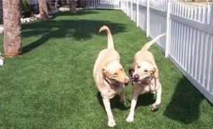 dog-runs Pets
