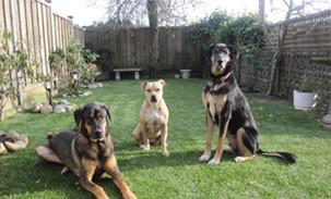 doggy-daycare Pets
