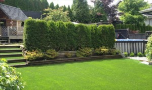 synthetic-grass-backyard Synthetic Lawns