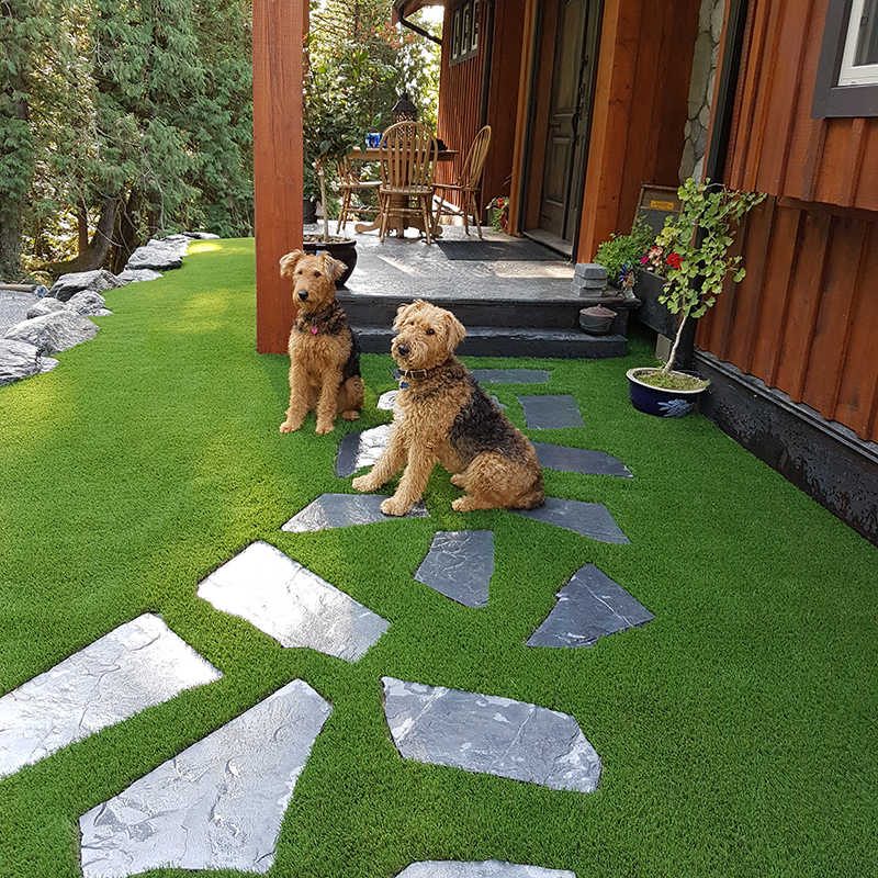 Grass That Your Dog Can Never Ruin